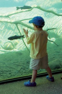 A young boy at South Shore's Taylor Creek Visitor Center measures up one of the fish that can be seen there.
