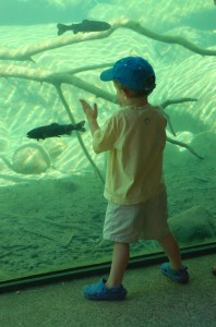 Boy in front of a fish tank
